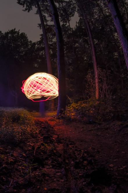 Lighting-mushroom-in-the-forest